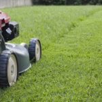 Trugreen Lawn Care on Using Fescue or Centipede Grass in Atlanta