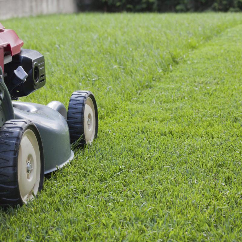 Trugreen Lawn Care on Using Fescue or Centipede Grass in Atlanta
