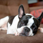 Five ways to deal with a flea problem