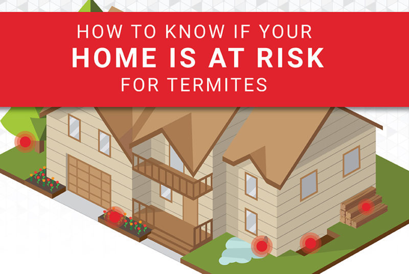 Are Termites Making a Meal of Your Home
