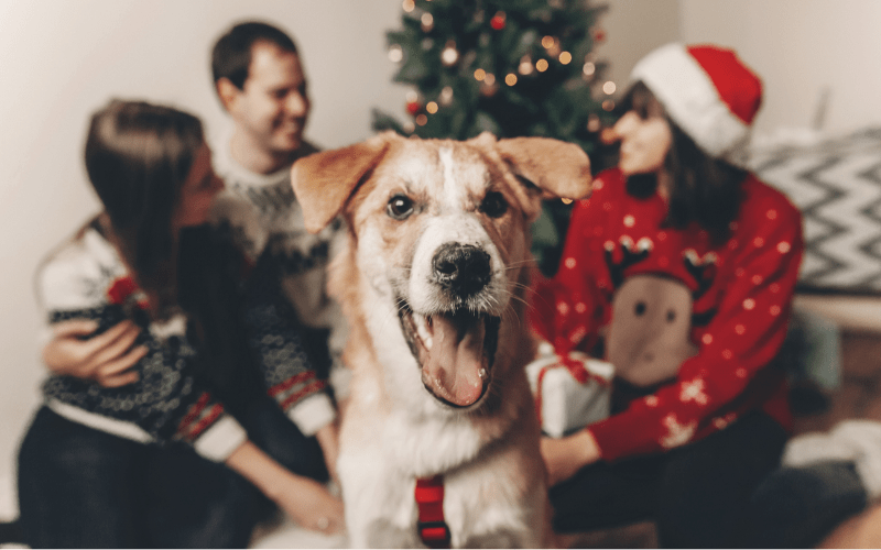 6 Ways to Keep Your Dog Safe During the Holidays
