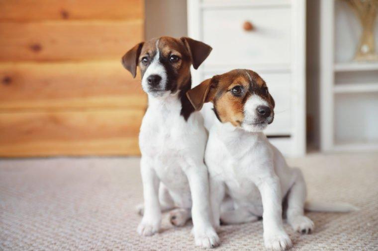 Common Home Pet Habits