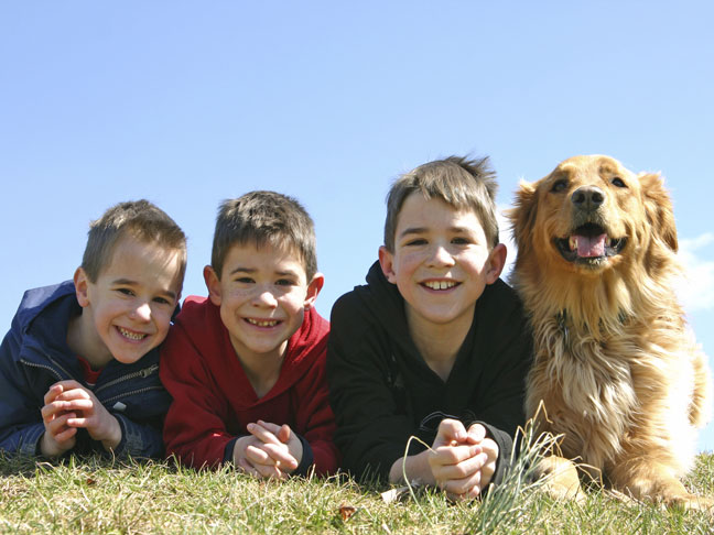 4 Things To Know About Getting a Family Dog
