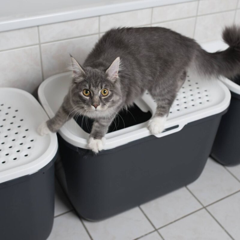 Territorial Cats and Their Litter Boxes: What To Do