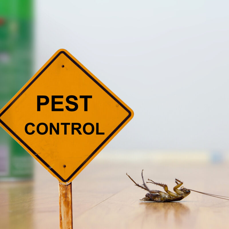 Should You Choose Professional or Do-It-Yourself Pest Control?
