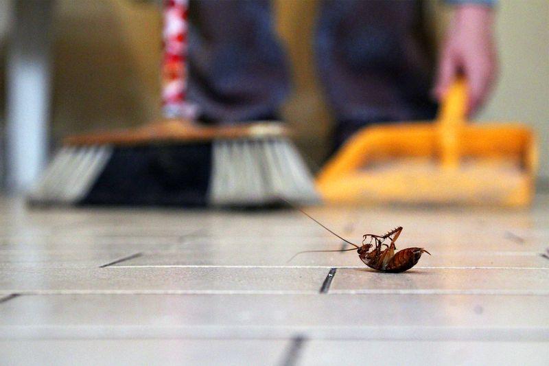 5 Reasons You Need Seasonal Pest Control