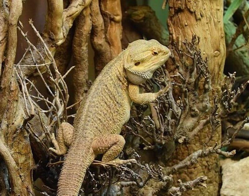 How to find the right wooden vivarium for your reptiles