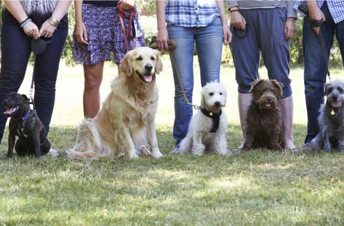 What To Look For When Choosing Training School For Dogs