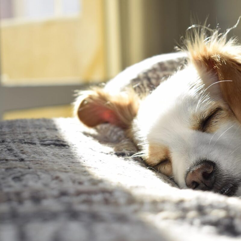 Creating the perfect sleep routine for your dog