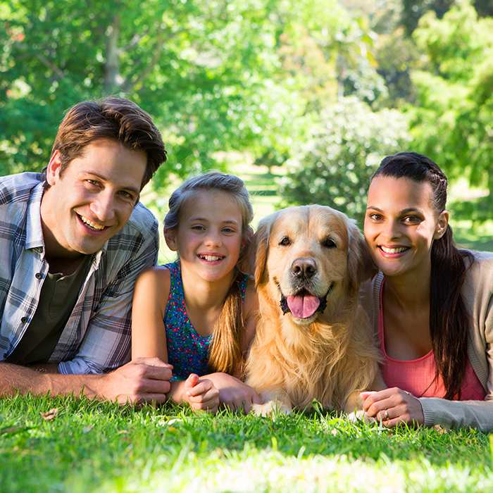 4 Tips for Adopting a New Family Dog