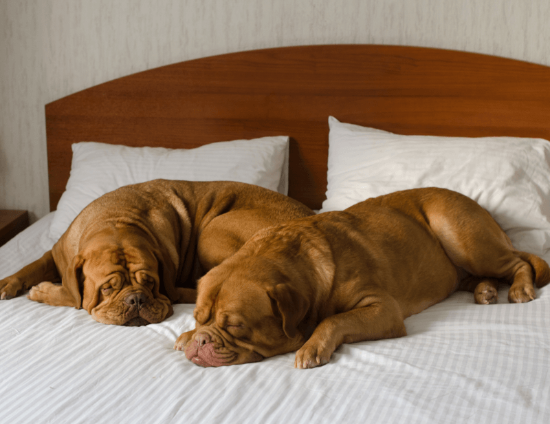 How to Choose the Ideal Bed for your Dog